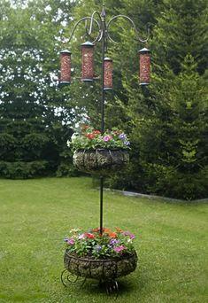 Wildlife in your Own Backyard | Sportsmans Habitat #backyardbirds