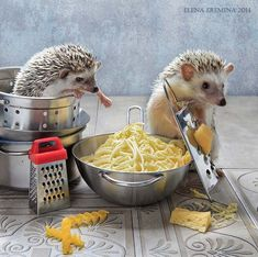 Tiny Hedgehogs Play Dress Up and Pose for Silly Photos - World's largest collection of cat memes and other animals Happy Hedgehog, Hedgehog Pet, Cute Hedgehog, Cute Little Animals, Cute Funny Animals, Small Animals, Funny Pets, Funny Food, Jing Y Jang