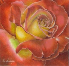 Rose In Colored Pencil