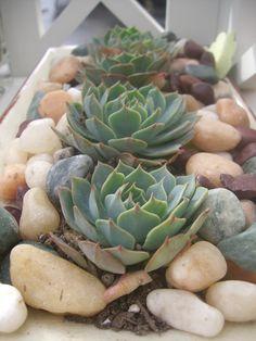 Suculentas... Nos encantan! http://milejardin.com/ #floristeria #florist #Alcañiz   succulent