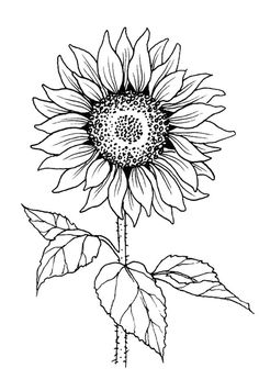 Pencil Art Drawings, Easy Drawings, Sunflower Drawing, Sunflower Tattoos, Sunflower Coloring Pages, Sunflower Tattoo Meaning, Sunflower Images, Outline Images, Wood Burning Art