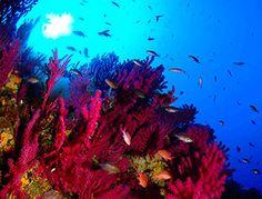 Les fonds marins de la Sardaigne