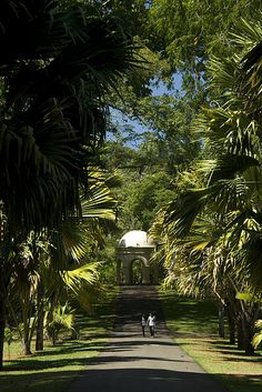 The Royal Botanical Garden, Peradeniya, Kandy, Sri Lanka (www.secretlanka.com)