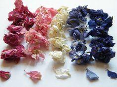 Delphinium confetti single colours for throwing