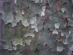 London Plane Tree Bark by Caro's Lines, via Flickr