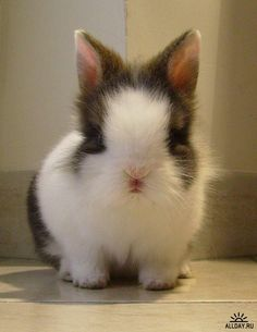 cute bunnies - Google Search