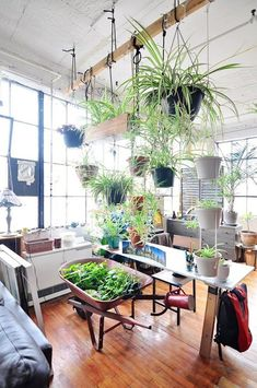 Beautiful Oversized Hanging Plants