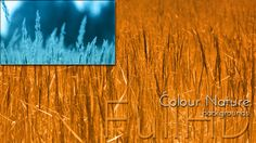 Nature Background Video Footages Collection, daily video project by cinema4design, colour tone video.
