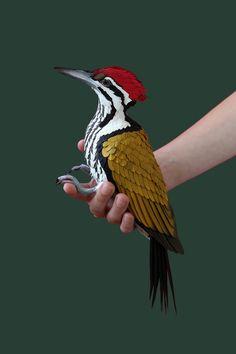 Home Parrot Image, European Robin, Best Photo Background, Paper Pop, Paper Birds, Pretty Designs, Colorful Birds, Photo Backgrounds, Hippie Chic
