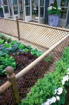 Fenced garden to keep the critters at bay. Red lettuce and salad greens in backyard fenced vegetable garden