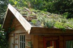 garden shed green roof - via apartment therapy