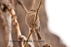 Bird photo finch in tree digital download by NaturePhotosMontana, $9.99 Personal and limited commercial useage.