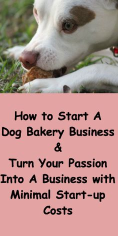 How to Start a Dog Bakery Business – Turn Your Passion Into A Business with Minimal Start-up Costs