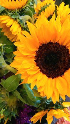 Beautiful Bouquet Of Flowers, Beautiful Flowers Wallpapers, Fall Flowers, Pretty Flowers, Sunflower Iphone Wallpaper, Daisy Wallpaper, Flower Phone Wallpaper, Sunflower Garden, Sunflower Art