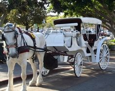 Take a romantic ride with my hubby in a horse drawn carriage!