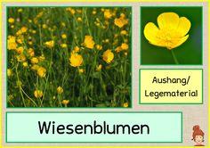"""Hallo ihr Lieben, bei uns geht es bald mit dem Thema """"Wiese"""" los und dazu habe ich Legematerial zu den Wiesenblumen erstellt. Z..."""