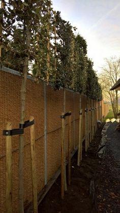 Lei Steeneik rekafmeting 120x120 Arch, Sidewalk, Lei, Backyard, Outdoor Structures, Travel, Groot, Garden, Tree Structure