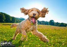 It's nearly the Buddy the is excited, can you tell? We absolutely adore this photo of Buddy during his Summer photo session with us, he is the dogification of no doubt about it! Do you have any planned with your doggies this weekend? Cavapoo, Summer Photos, Photo Sessions, Funny Dogs, Doggies, Adventure, Happy, Gifts, Animals