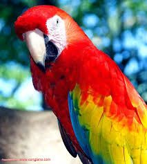It's very beautiful parrot..!!