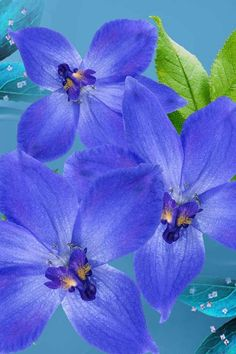Blue And Purple Flowers Wallpaper