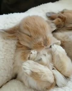 Cute Overload: Internet`s best cute dogs and cute cats are here. Aww pics and adorable animals. Fluffy Animals, Baby Animals, Cute Animals, Gif Mignon, Cute Gifs, Animals Tattoo, Rabbit Gif, Bunny Rabbit, Bmw Autos