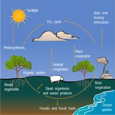 carbon dating explained gcse