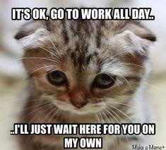Cat Jokes, Funny Animal Jokes, Funny Cat Memes, Cute Funny Animals, Funny Animal Pictures, Funny Cats, Animal Pics, Kittens And Puppies, Cute Cats And Kittens
