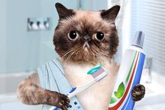How and why you should be brushing your cats teeth  #cats #cattoothcare #cathealth