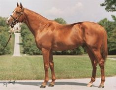 Sky Classic, a four-time Champion in the U.S. and Canada, died peacefully this morning in his paddock at Josephine Abercrombie's Pin Oak Stud, according to farm manager Clifford Barry.  The 28-year-old stallion had stood at the farm since his retirement from racing in 1992 and had been pensioned from stud duty in January of this year.