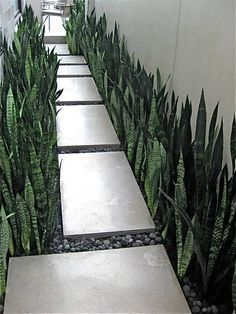 narrow paved pathway to front door - Google Search