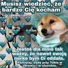 Cute Love Memes, Funny Cute, Cute Sentences, Dog Pictures, Cute Pictures, Funny Lyrics, Funny Animals, Cute Animals, Sweet Memes