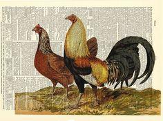 https://www.etsy.com/es/listing/166382543/gallo-diccionario-art-print-vintage?ref=shop_home_active_263