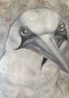 A large graphite and conte drawing from one of my favorite models at the Peabody Natural History Museum-- the Northern Gannet.
