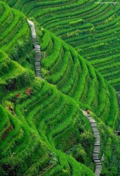 janetmillslove: Longsheng Rice Terra moment love