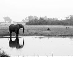 Delta de l'Okavango — Wikipédia