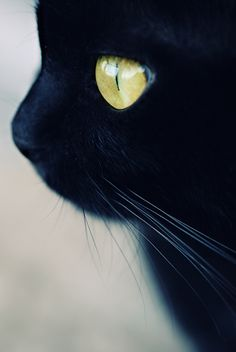 Beautiful black cat, love this shot!