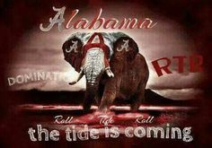 "See 3 photos and 1 tip from 524 visitors to Verbena, AL. ""Ever heard of Verbena, Alabama. Alabama Football, Verbena, Roll Tide, Crimson Tide, Ua, Champs, Pride"