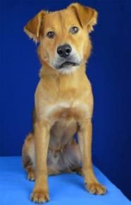 Search for pets for adoption at shelters near Ashburn, VA. Find and adopt a pet on Petfinder today. Golden Retriever Mix, Pet Search, Humane Society, Pet Adoption, Shelter, Creatures, Cutest Animals, Pets, Facebook