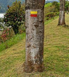 marques de voyage sur les arbres Banque d'images