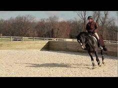 picking up the correct canter lead
