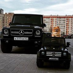 Good morning! Are you ready for the day? You always are with #TheBestOrNothing   #Gclass #MercedesBenz #AMG #Autoindustriale #DogsOfInstagram #instadog