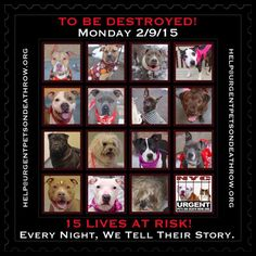 TO BE DESTROYED: 15 beautiful dogs to be euthanized by NYC ACC- MON. 02/09/15. This is a VERY HIGH KILL shelter group. YOU may be the only hope for these pups! ****PLEASE SHARE EVERYWHERE!!To rescue a Death Row Dog, Please read this: http://urgentpetsondeathrow.org/must-read/ To view the full album, please click here: https://www.facebook.com/media/set/?set=a.611290788883804.1073741851.152876678058553&type=3