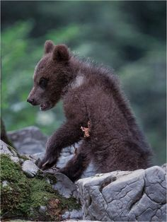 [ young bear ] by DEIWAT / 500px