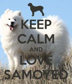 keep calm and love a samoyed