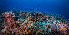 This is an amazing reef in Raja Amapt