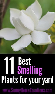 Best Smelling Plants for Your Yard 11 Best Smelling Plants for your yard. This is such a great list of good smelling plants. I think I like the Best Smelling Plants for your yard. This is such a great list of good smelling plants. I think I like the best Landscaping Plants, Front Yard Landscaping, Landscaping Ideas, Hydrangea Landscaping, Outdoor Landscaping, Organic Gardening, Gardening Tips, Vegetable Gardening, Gardening Books