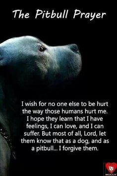 Pitbull Prayer: This truly defines a pitbull. No matter what happens to them they always find a way to forgive a person for something that someone else did to them.Thats why pitbulls are truly my favorite breed.