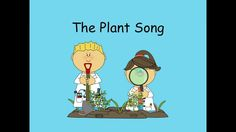 The Plant Song Very well done. To the tune of the Cup Song. Teaches parts of plants. The Plant Song 1st Grade Science, Primary Science, Kindergarten Science, Elementary Science, Science Classroom, Science Education, Teaching Science, Science Activities, Sequencing Activities