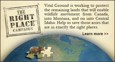 Protecting grizzly bear habitat in North America:   http://www.vitalground.org/how-you-can-help/special-campaigns-funds/