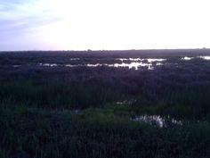 "reserva de aves acuaticas ""el prat de cabanes"", parque natural."